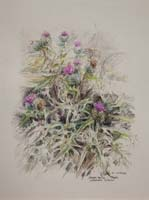 Spear Thistle by Peter Biehl