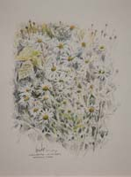 Marguerites. South Nesting by Peter Biehl